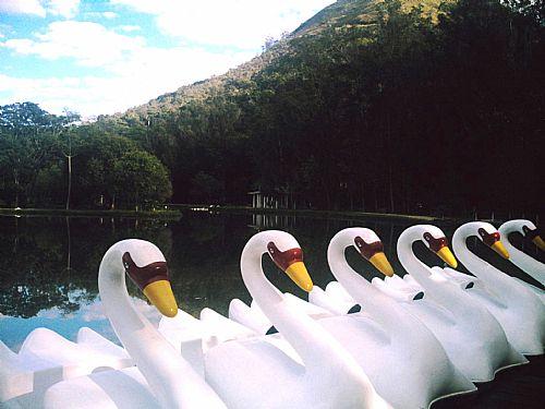 Pedalinhos da Lagoa do Parques - Cr�ditos T.M
